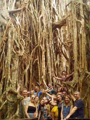 Cathedral Fig Tree - Atherton Tablelands