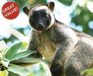 spotlight for North Queensland tree-kangaroos