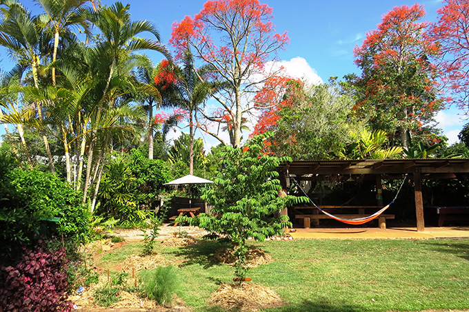 OTW lodge yard - Yungaburra Accommodation
