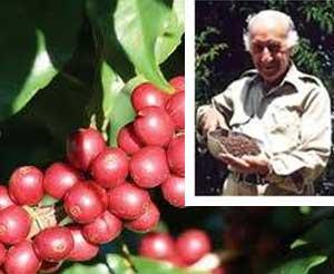 Mareeba Coffee plantations